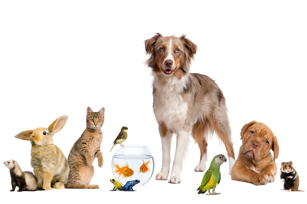 Orlando veterinarian accounting